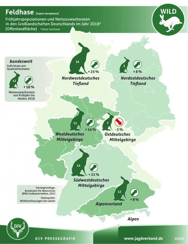 Grafik Feldhasenbestand Deutschland