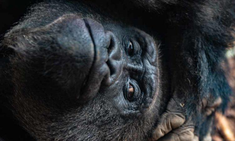 Die schönsten Tierparks und Zoos in Deutschland