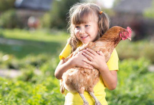 5 Tiere um in das Hobby-Bauernhofleben einzusteigen