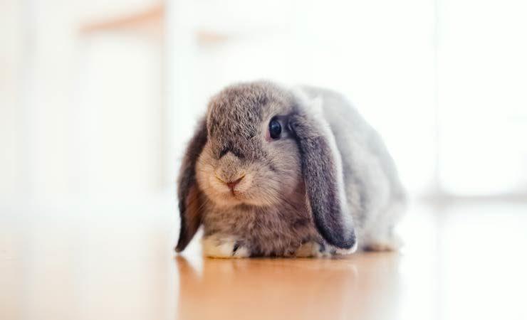 Aggression bei Kaninchen