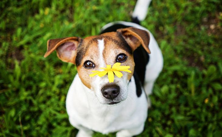 Allergien beim Hund