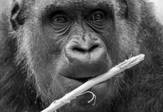 Artensterben - Immer mehr Tierarten verschwinden