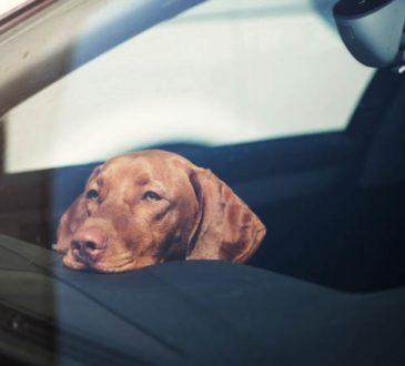 Ist es erlaubt, eine Autoscheibe einzuschlagen, um einen Hund zu retten?