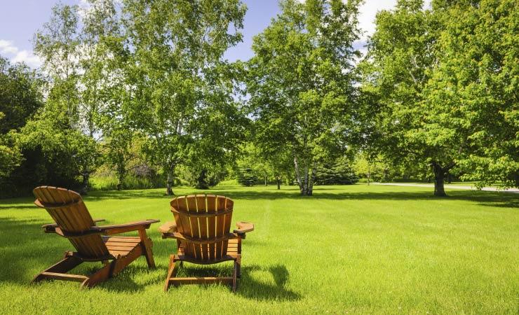 Bäume auf dem eigenen Grundstück