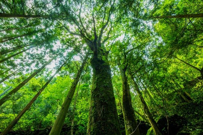 Bäume gut für den Klimaschutz