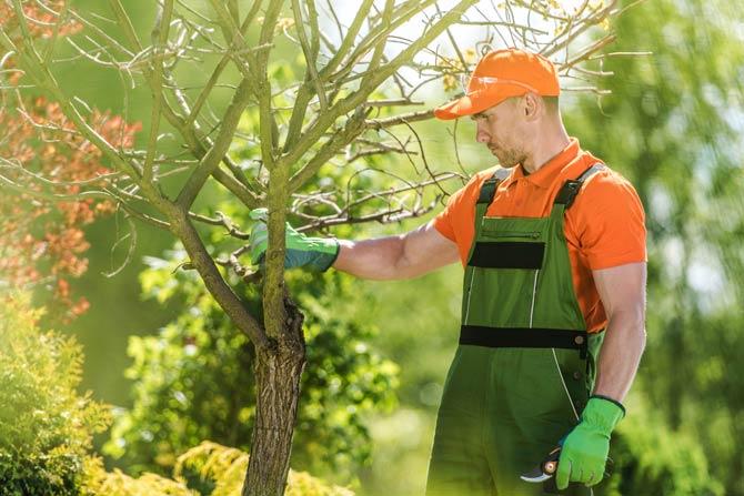 Ein Baum sollte gut ausgesucht sein