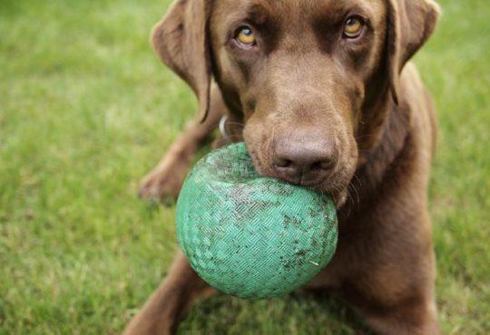 Beschäftigungstipps für Hunde