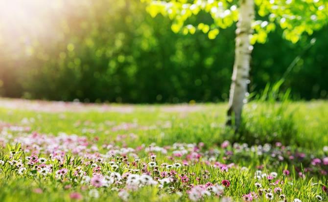 Bunte Wiese im Traumgarten