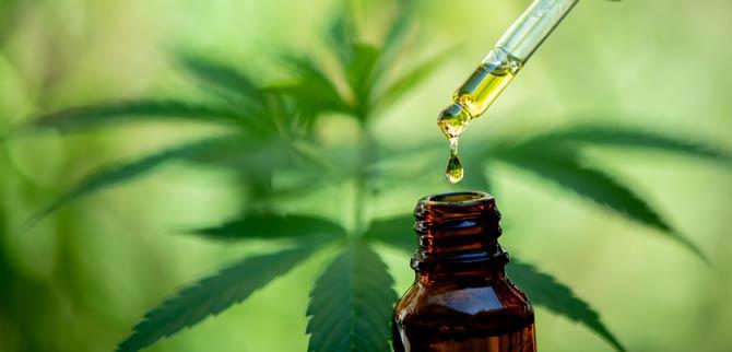 Im Gegensatz zu Marihuana enthält CBD keine psychoaktiven Ingredienzien