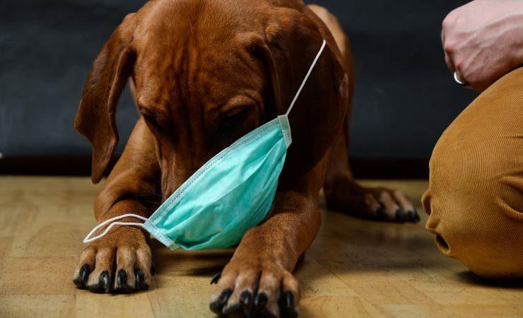 Covid-19: Welche Tiere können sich mit dem Virus infizieren?