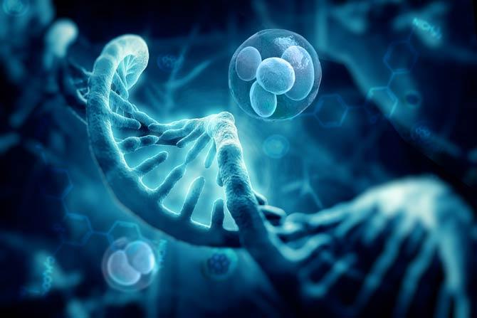 DNA Reparaturprotein