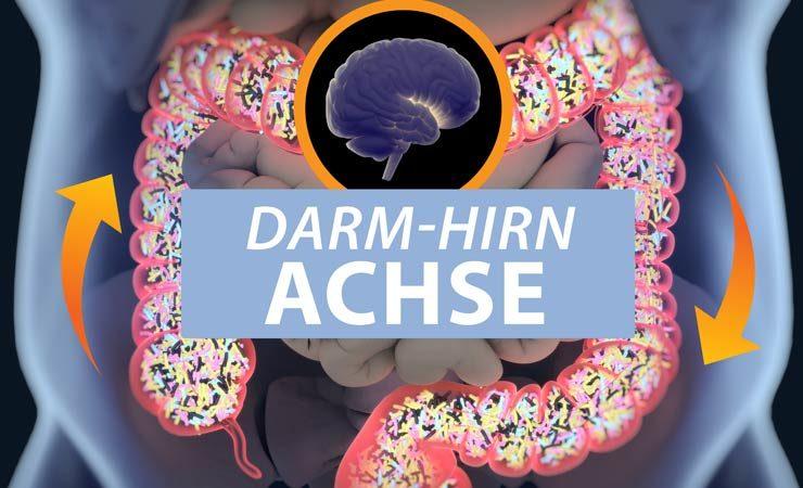 Darm-Hirn-Achse