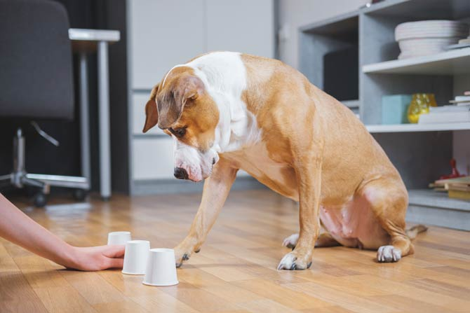 Denkspiele fordern Hunde