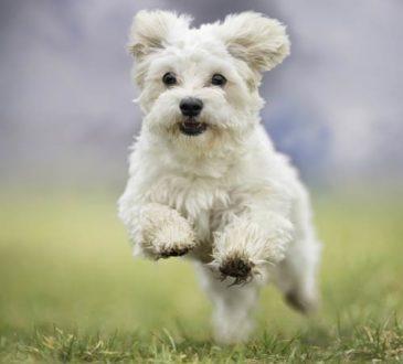 Der erste Hund