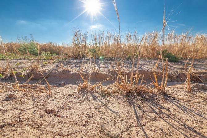 Dürre und Trockenheit