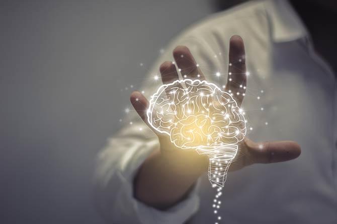 Entwicklung des Gehirns
