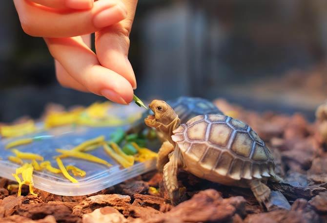 Ernährung Schildkröte