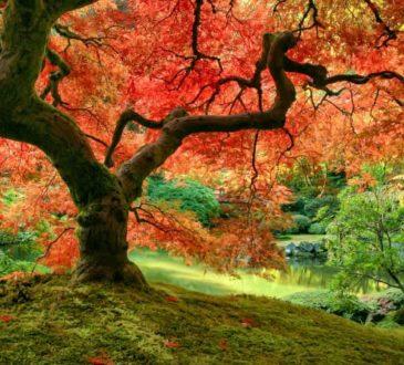 Gartenbäume für den Wow-Effekt im Herbst