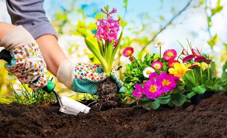 Gartengestaltung im Frühling