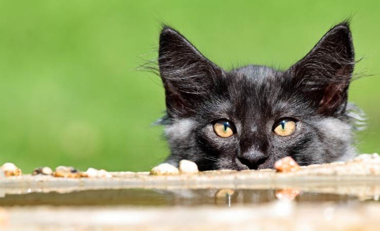 Gefahren für Haustiere im Garten