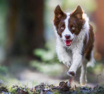 Gründe warum Hunde weglaufen