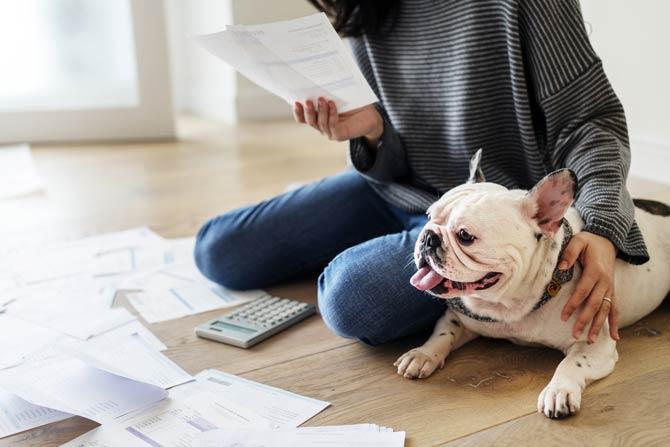 Haustier - Folgekosten