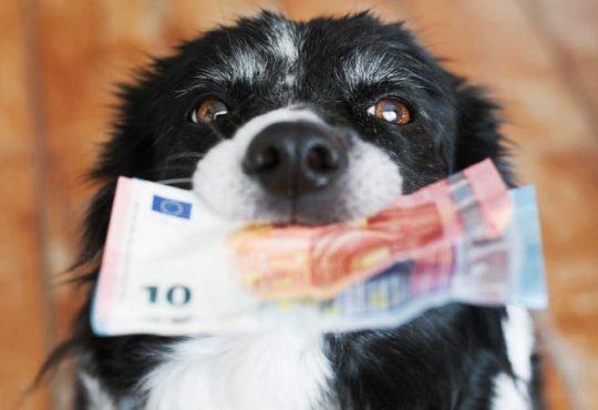 Was kostet ein Haustier wirklich?