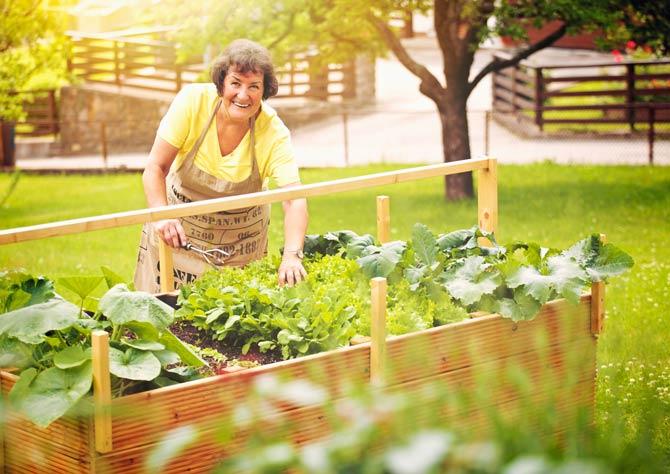Im Gegensatz zum klassischen Beet ermöglichen Hochbeete eine rückenfreundliche und bequeme Gartenarbeit