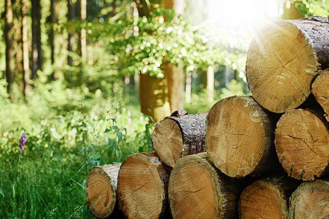 Holz ist einer der wenigen natürlichen und nachwachsenden Baustoffe