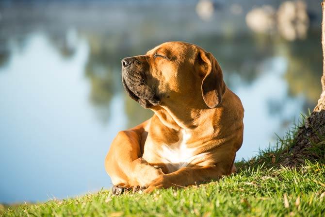 Hund beim Sonnenbaden