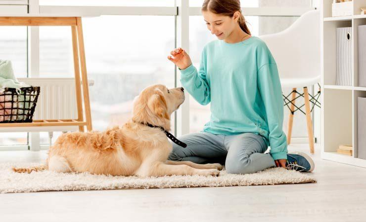 Hund trainieren