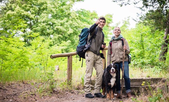 Grundsätzlich sind Hunde in Deutschland auf allen Wanderwegen erlaubt