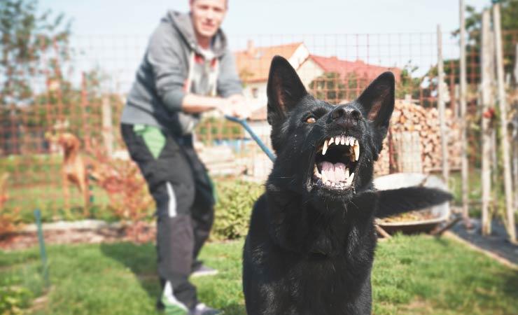 Hunde im Garten - Ein Grund zur Kündigung?