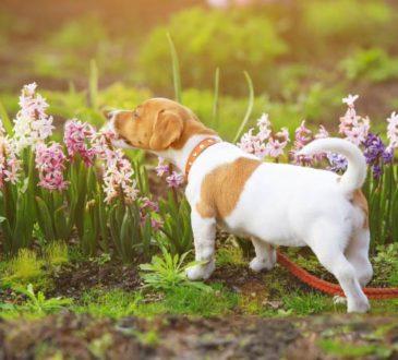 Hunde von Blumenbeeten fernhalten