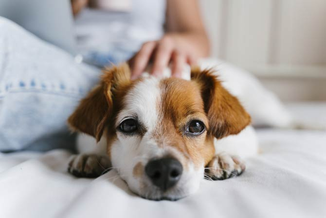 Hundewelpen - Eingewöhnung