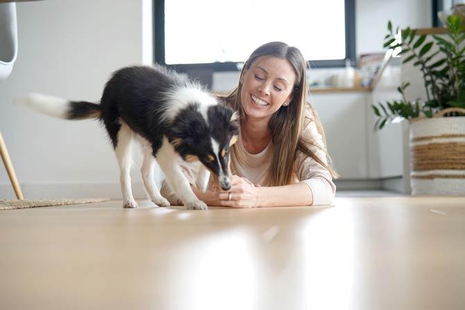 Hundewelpen - Haus kennenlernen