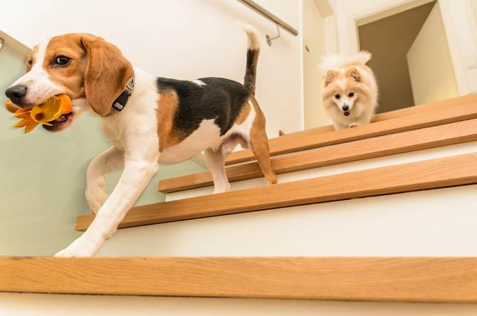 Hundewelpen - andere Haustiere