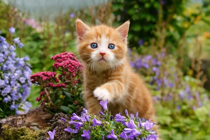 Junge Katzen besonders gefährdet