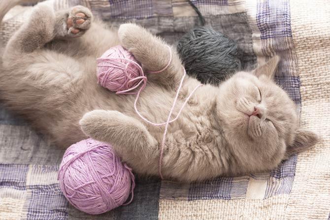 Kätzchen schnurrt