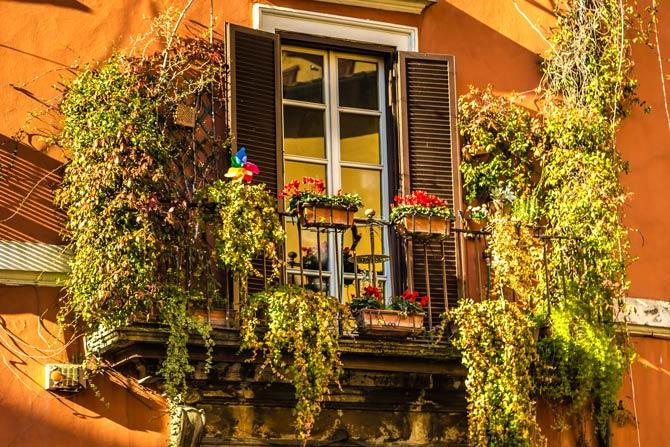 Kletterpflanzen für den Balkon