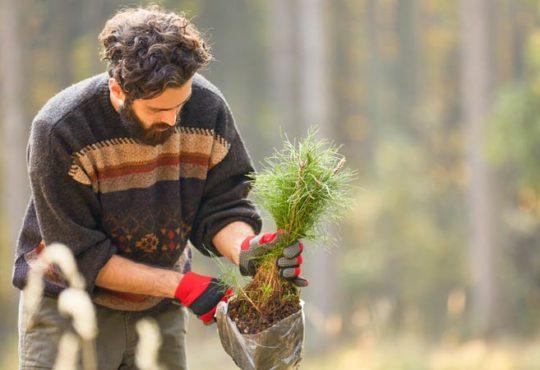 Klimaretter Baum