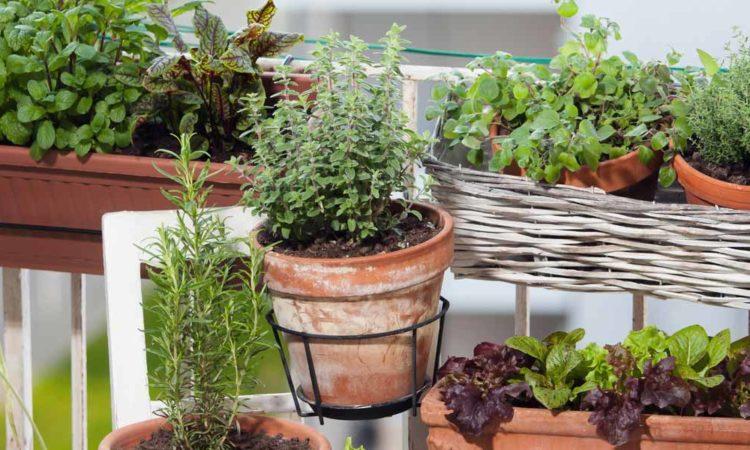 Kräutergarten auf dem Balkon anlegen - Tipps