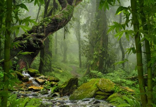 Kreidezeit: Überreste eines Regenwaldes vor Westantarktis gefunden