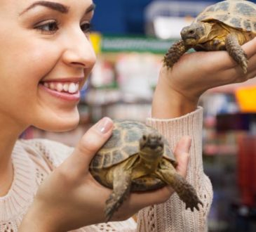 Landschildkröte halten