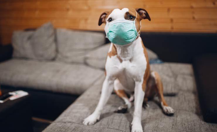 Coronavirus - Meldepflicht für Haustiere