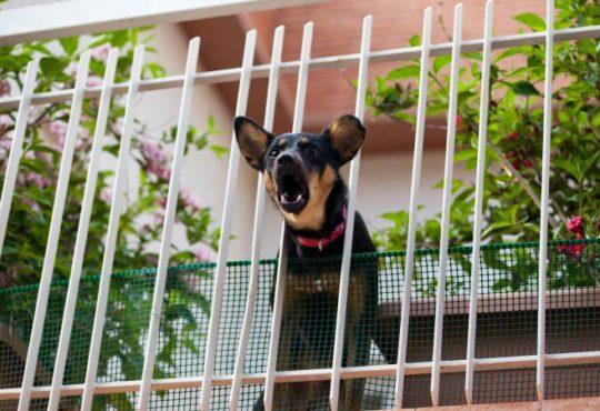 Müssen Nachbarn das Hundebellen dulden?