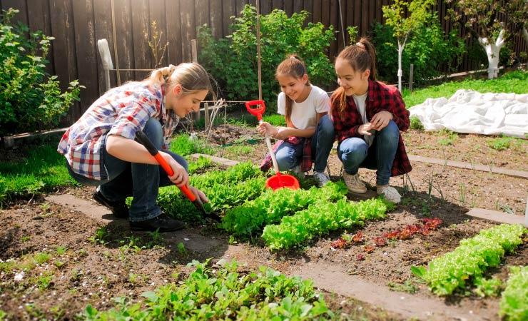 Obst und Gemüse im Garten anpflanzen