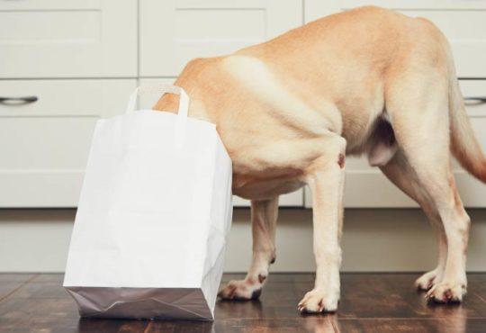 Wenn Papiertüten für Tiere zur tödlichen Falle werden