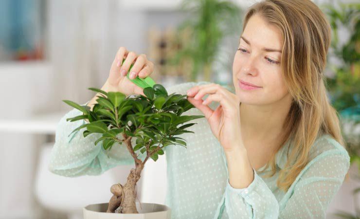 Wie Pflanzen im Haus nach Feng Shui am besten platziert werden