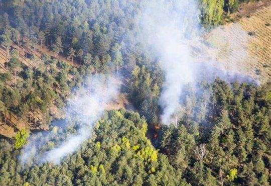 Rauch beim Waldbrand